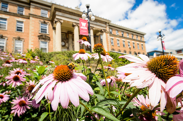 summer flowers in front of a campus building