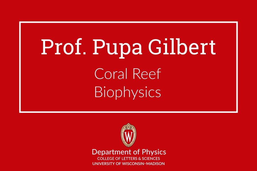 title slide that says Pupa Gilbert, coral reef biophysics and contains the dept logo